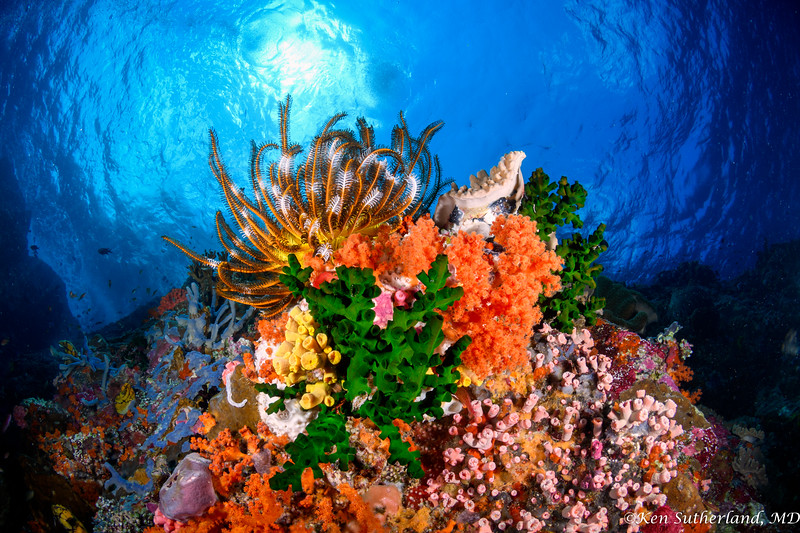 Crinoid and colourful corals