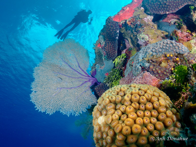 Diver over Colourful Reef