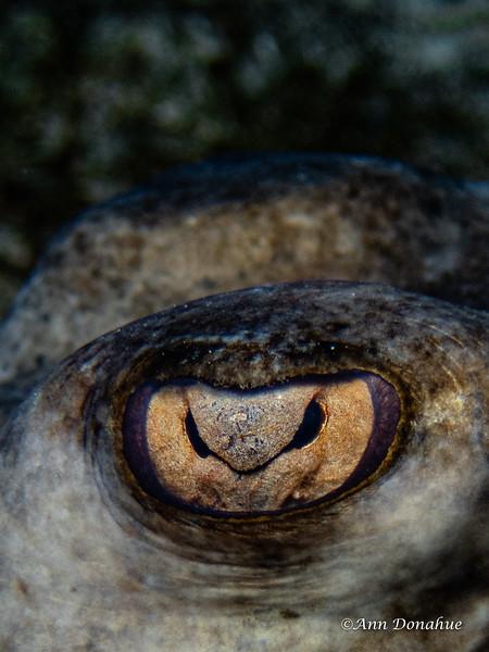 Stingray Stare