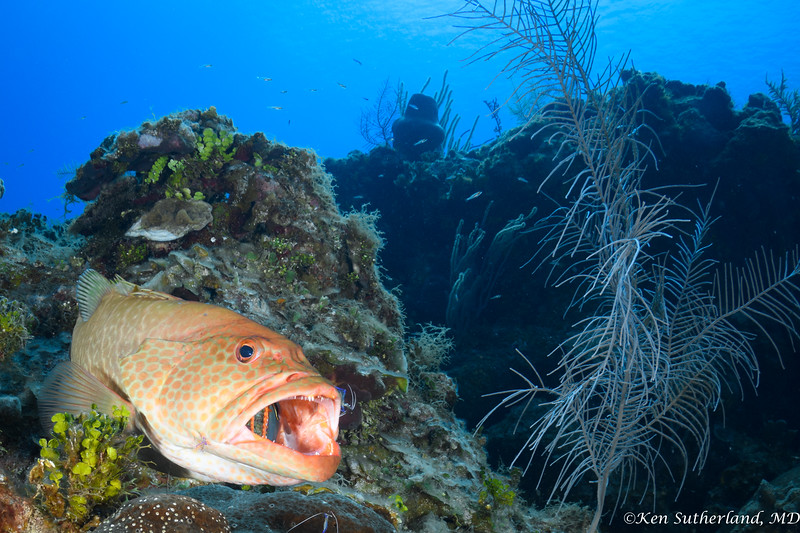 Grouper Mega Cleaning