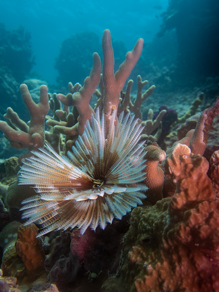Tube Worm Reef Scene