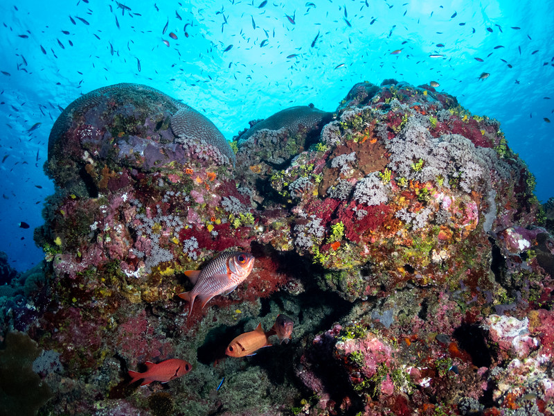 Yap Caverns Reef Scene