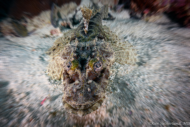Crocodile Fish with Blur background