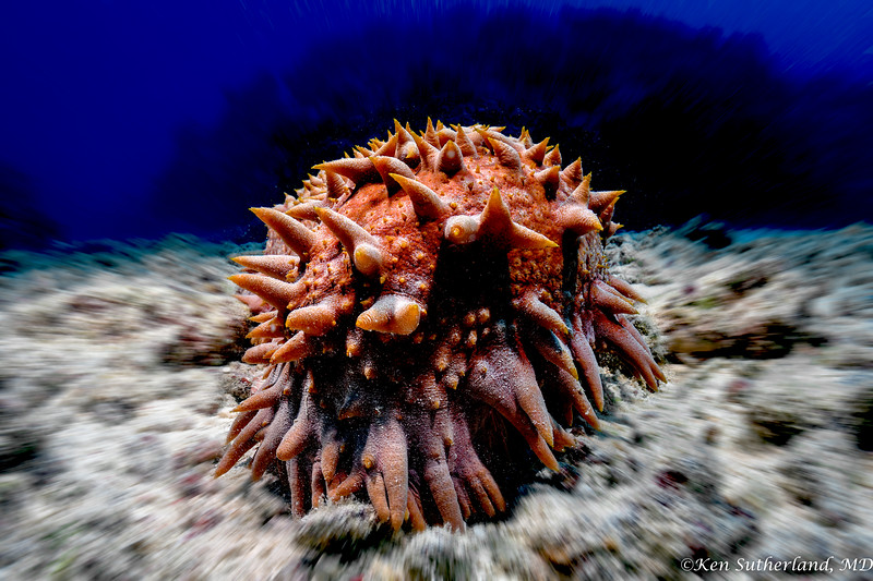 Sea Cucumber or Monster?