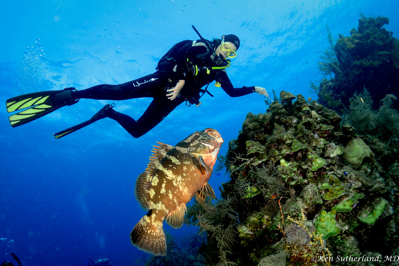 Nassau Grouper and diver