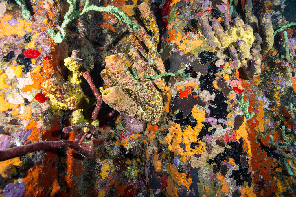 Sponges thriving under Town Pier