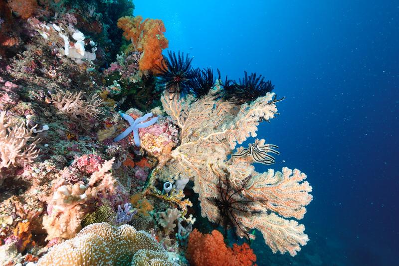 Coral Scene Bangka