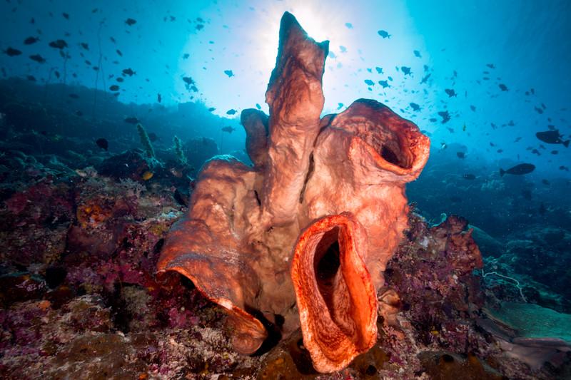 Sponges on Reef