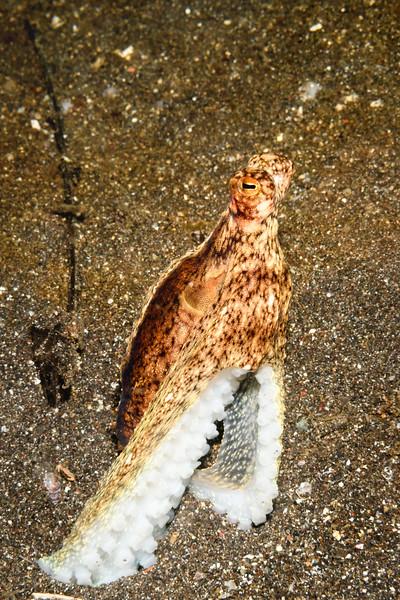 Long Arm Octopus