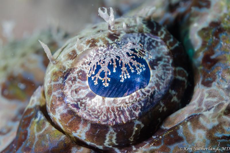 Eye of the Crocodile Fish