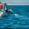 Gray Whale calf approaches a boat, San Ignacio Lagoon