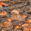 Kuyimà shells in the tide