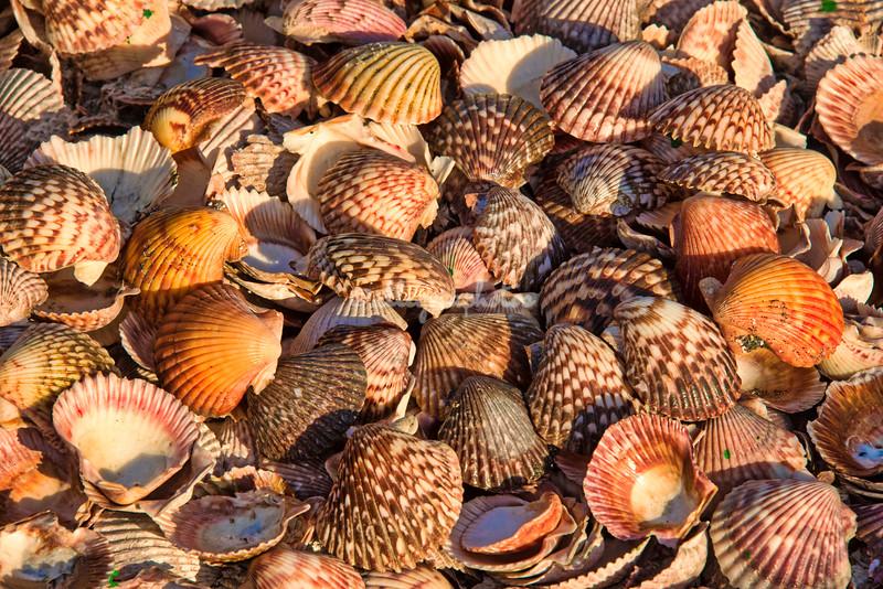 Kuyimà whale camp shells