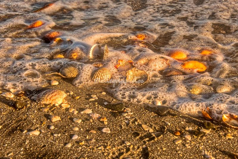 Shells in the Morning Tide, Lagoon San Ignacio