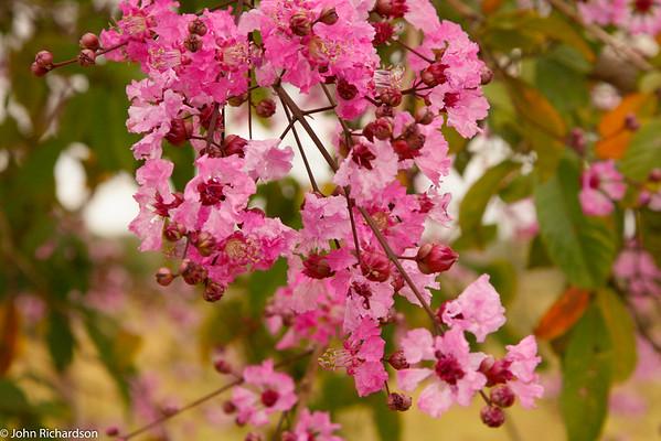 Arica blossoms - Bom Jardin