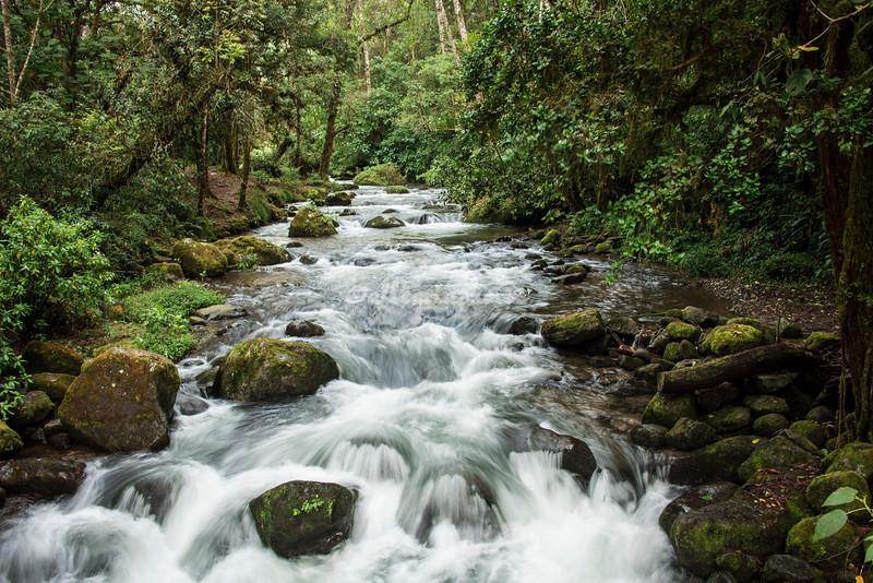Savegre River, Talamanca Mountains