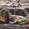 Sea Lion colony catching some rays on the rocks at the tip of Baja