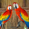 Arrival at Xcaret...first stop, the macaws!