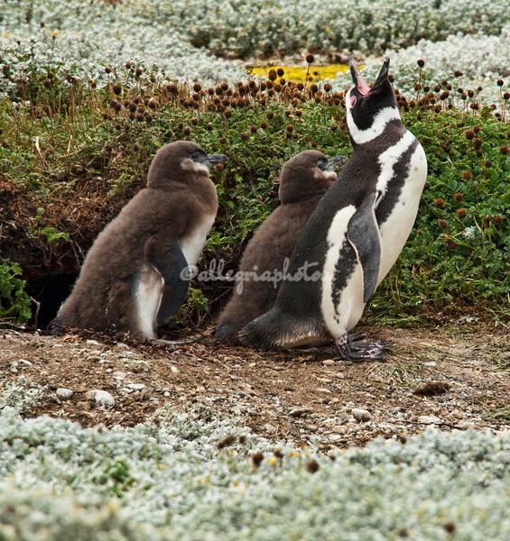 Otway Sound, Patagonia,Chile
