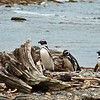 Otway Sound, Patagonia, Chile