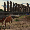 Horses grazing in front of the 15 moai of Tongariki.