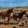 Easter Island Horses