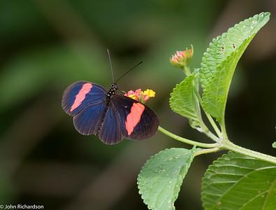 Butterfly - Bellavista Reserve
