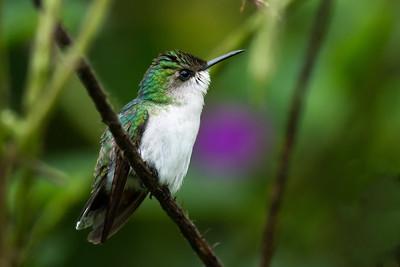 Costa Rica-5