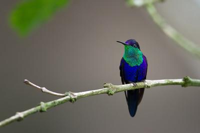 Costa Rica-8