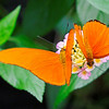 Mindo - Butterfly Farm