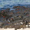 Santa Cruz Island - Playa Las Bachas