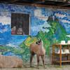 Lamas and Sombreros
