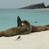 Espanola Island - Sea Lions