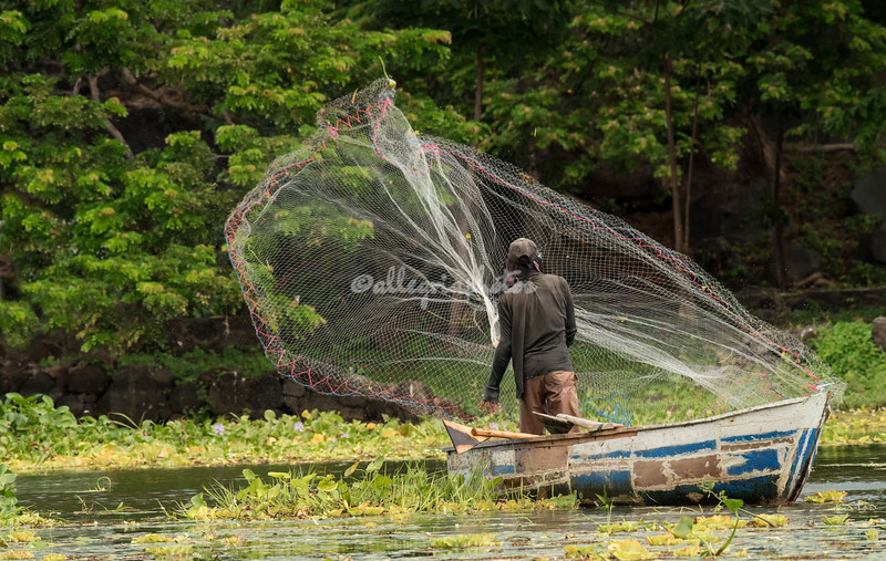 A fisherman throws out his net, Lake Nicaragua