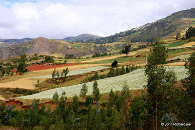 anise and kichwa fields on way to Cachora