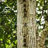 Long nosed bats