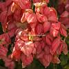 Tropical flowering tree