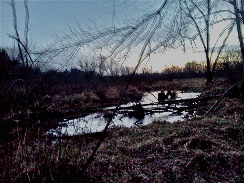 Marsh<br /> <br /> Credit: Roseanne T. Sullivan
