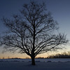 Winter Dawn at Still River<br /> Credit: Mark C. Buell<br /> Cropped by Roseanne T. Sullivan