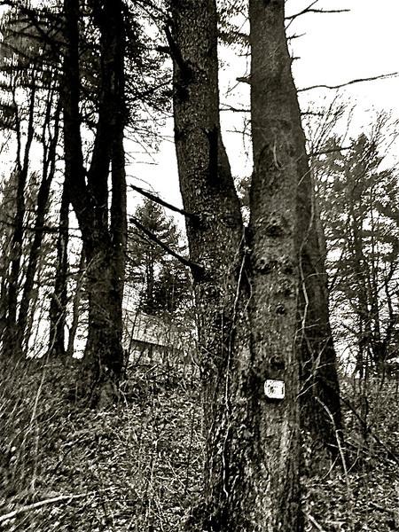 Chapel in the woods<br /> Credit: Roseanne T. Sullivan