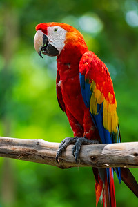 Macaw, Turbaco