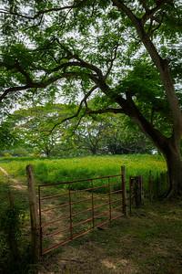 Fence near the entrance to Jardin Botanico Guillermo Piñeres
