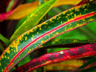 Plants, Ometepe Island