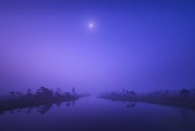 Blue Hour Bog