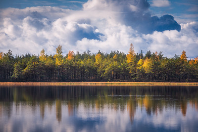 Autumn Harmony