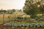 Lauberge Gardens A 10 Th LAuberge Provencale