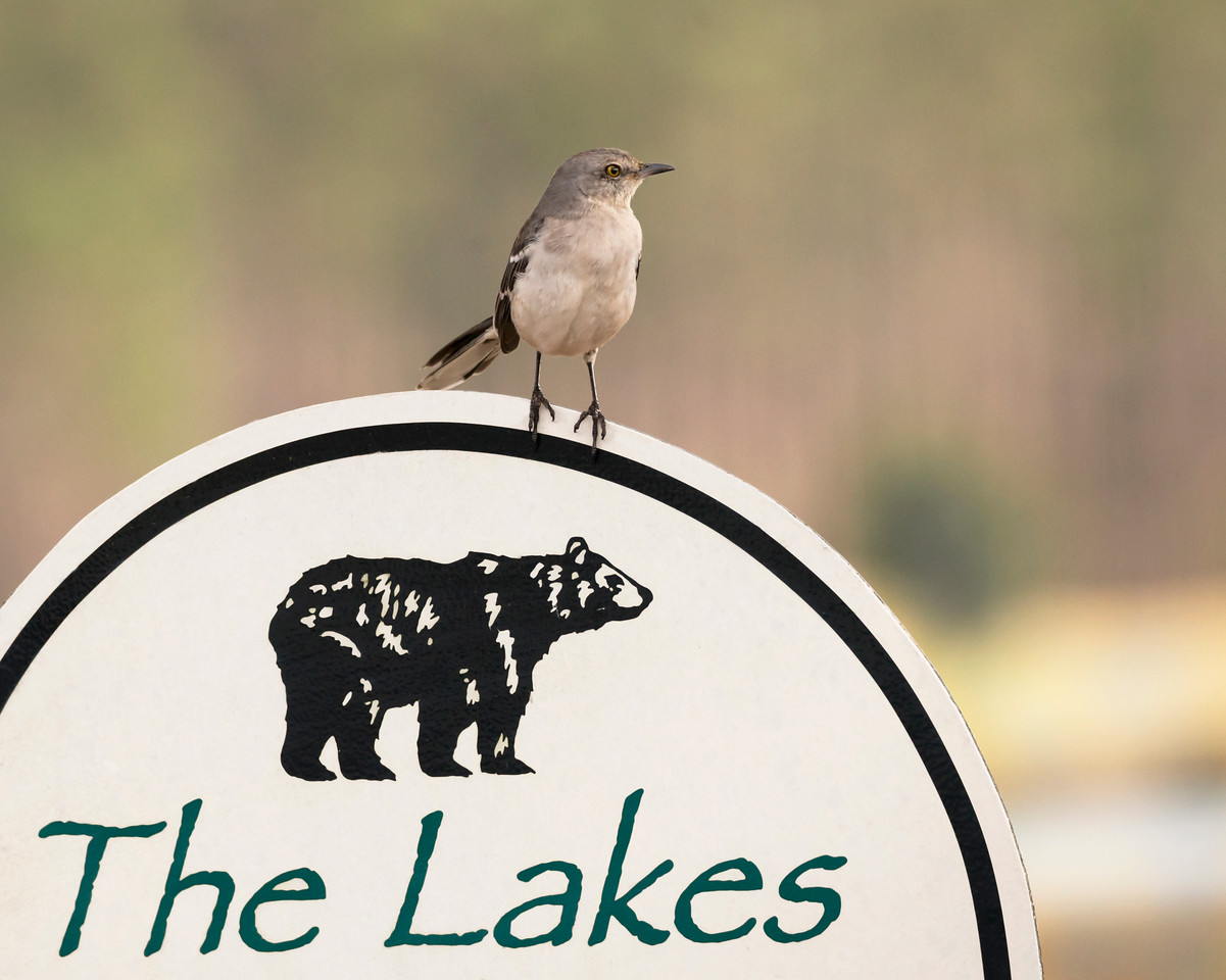 The Lakes Visitor at Laura S Walker