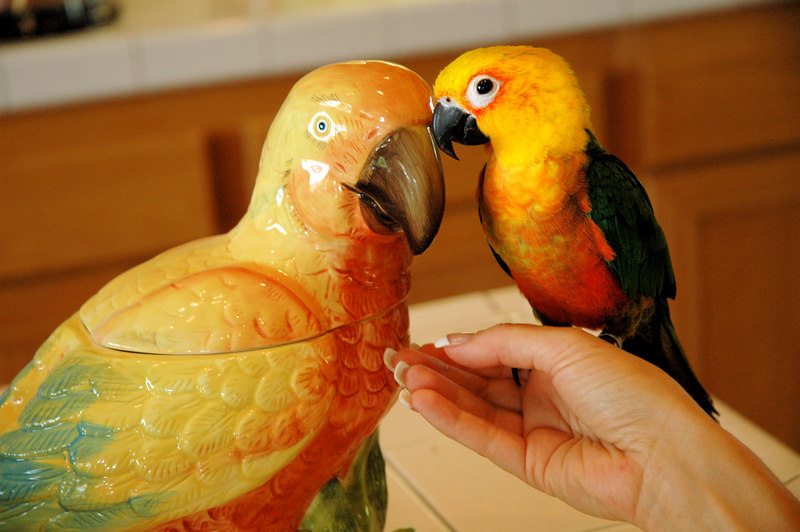 Alex the Parrot thinks he found his Mommy