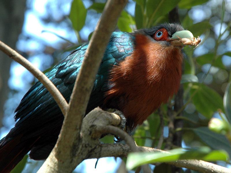 Blue Eyed Weird Bird with Bug