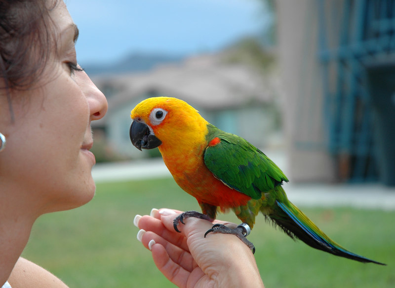 Dawn and her Parrot, Alex